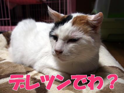 20130409home05_oomike.JPG