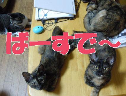 Happy2012_03.JPG