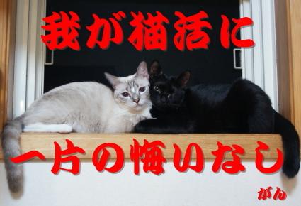 2013収支報告.jpg