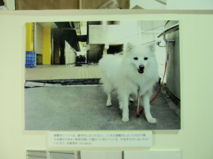 20140802fukushima24.jpg
