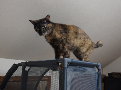 20140825CatTower02.jpg