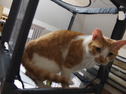 20140825CatTower04.jpg