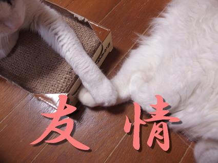20170427sai_mimi04.jpg
